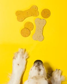 Pumpkin Flaxseed Dog Treats....1 tablespoon ground flaxseed meal 5–6 tablespoons water 2 tablespoons all-natural, no-sugar-added peanut butter ½ cup pumpkin purée 2 cups brown rice flour