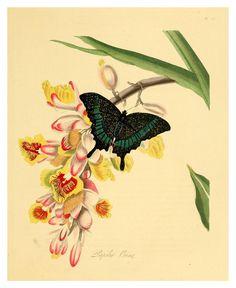 Vintage Illustration Art, Vintage Artwork, Botanical Illustration, Illustrations, Vintage Botanical Prints, Botanical Art, Historia Natural, Natural History, Asian Art