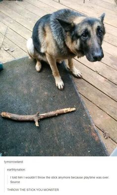 Throw the fucking stick!>>> The dog reminds me of Trico (The Last Guardian)