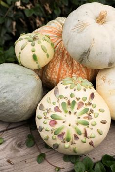 Decorate pumpkins with succulents