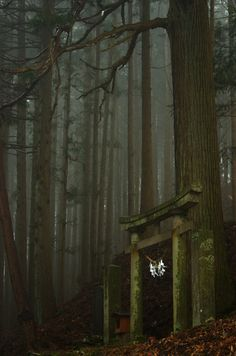 miizukizu: Shinto torii gate in the Japanese forest…. (Dreaming In blue) miizukizu: Shinto torii gate in the Japanese forest…. Fantasy Forest, Forest Art, Autumn Forest, Dark Forest, Forest Logo, Snow Forest, Forest Cabin, Night Forest, Magic Forest