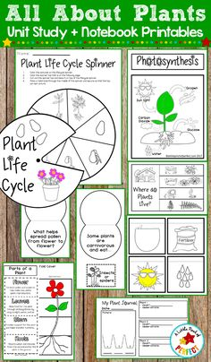 Plant Life Cycle Worksheet, Plant Lessons, Sequencing Activities, Science Activities, All About Plants, Plant Crafts, Life Cycles, Author Studies, Unit Studies