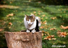 Cat , Yoğurtçu Parkı , Kadiköy , İstanbul