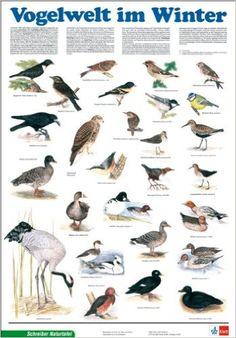 Schreiber Naturtafeln, Vogelwelt im Winter Klett-Perthes Naturtafeln: Amazon.de…