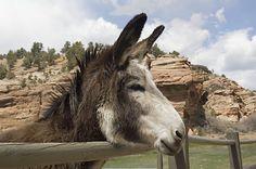 Best Friends Animal Sanctuary, Utah