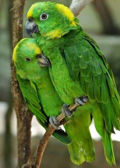 Mom & I as birds hugging each other.