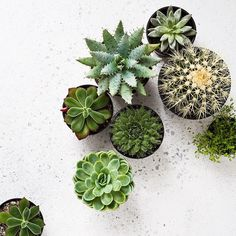 Inspiration can be found anywhere. From a plant travel a conversation or family memory. How lovely is this collection of succulents by @indiehomecollective  #inspire #zoeandmorgan