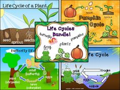 Life Cycle Mega Bundle: Plants, Pumpkins, Butterflies, and Frogs! $