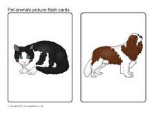 Pet animals picture flash cards