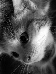 on dirait un ange qui s'est perdu et qui est tomber du ciel...♥ I love cat♥
