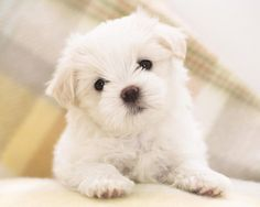 Cheese! cute animals dogs puppies