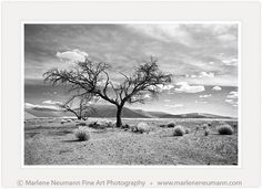 Marlene Neumann is a Master Photographer who intuitively captures the emotion in a landscape, beyond the camera.Her Black and White photographs are timeless Fine Art Photography, Landscape Photography, Desert Trees, Like Image, Photographs, Branches, African, Grass, In This Moment