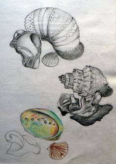 International GCSE Art sketchbook page exploring natural shell forms