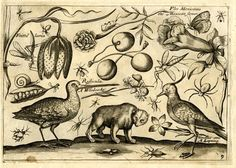 Part 1, plate 9 from a series of pattern or copybook sheets: an arrangement of birds, animals, fruit, flowers, and insects, with a bear at lower centre, three cherries above the bear, a woodcock (snipe) at lower left, and a lapwing at lower right. Engraving after John Payne.