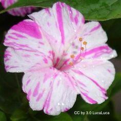 Clownie 4 o clocks pinterest clocks flowers and gardens mightylinksfo