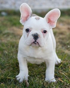 Dog breed info dog breeds and dogs on pinterest