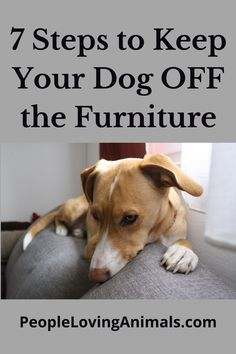 7 Steps to Keep Your Dog Off the Furniture Keep dog off the couch, keep dog off the sofa, keep dog off the bed, how to keep dog off furniture, training dog to stay off the furniture, Dog Training, Puppy Training Dog Training Videos, Training Your Dog, Puppy Care, Dog Care, Dog Separation Anxiety, Kitten Care, Aggressive Dog, Sofa, Couch