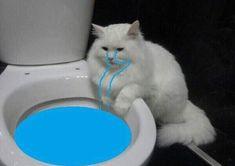 Memes sad cat ideas for 2019 I Love Cats, Cute Cats, Funny Cats, Funny Animals, Cute Animals, Funny Images, Funny Pictures, Sad Cat, Sad Kitty