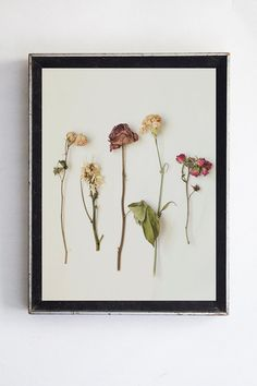 Dried Floral Arrangement Still Life Photography by bellesandghosts