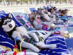 Dog #Days at the #Beach