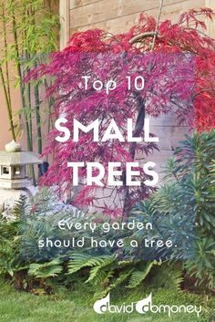 Top 10 Small Trees Every garden should have a tree. They can bring you privacy and shade, as well as lovely variance in height and structure. Many also bring stunning autumn colour or pretty spring blossom, and some will even reward you with a crop of edi Small Trees For Garden, Fruit Tree Garden, Trees For Front Yard, Garden Plants, Small Landscape Trees, Small Front Yards, Shade Garden, Plants For Patio, Small Garden Shrubs