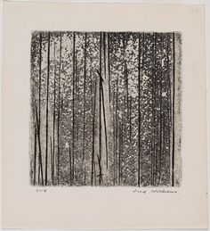 Fred Williams Sherbrooke Forest no. 2 1961 Engraving and aquatint on paper 19.5 x 17.8cm 13.5 x 13.2cm (comp.) Acc. 1998.136 Gift of James Mollison, A.O. through the Queensland Art Gallery Foundation 1998. Donated through the Australian Government's Cultural Gifts Program