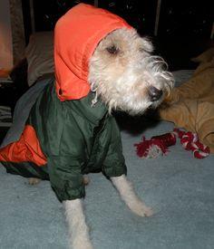 http://www.rumplepimple.com/ wire fox terrier rumpelpimple