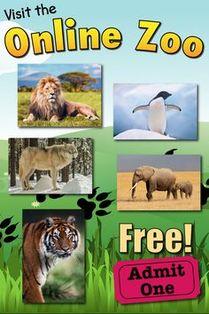 zoo animals An awesome online zoo, with animal pictures and facts. See all your favorites and discover many lesser-known species. Visit the FREE online zoo now! Animal Facts For Kids, Animal Pictures For Kids, Zoo Pictures, Science Activities, Jungle Activities, Animal Activities For Kids, Preschool Kindergarten, Preschool Learning, Educational Activities