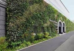Afbeeldingsresultaat voor green hedera wall