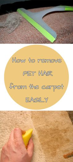 How to remove pet hair from the carpet easily - CleaningDIY.net