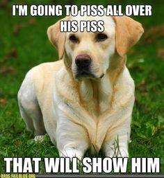 Haha dog logic