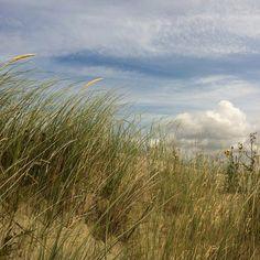 """dunes of """"De Slufter"""", Texel, North Holland #texel #holland #nature"""