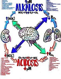 personal favorite of mine, acid-base equilibrium Pharmacology Nursing, Icu Nursing, Funny Nursing, Rn School, Medical School, Nursing School Notes, Nursing Schools, Emergency Medicine, Medicine Notes