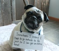 """Sometimes I pretend I have to go outside to pee just so I can get the extra treat."" ~ Dog Shaming shame - Pug - Arlo So does this. He even fakes me off and ""pretends"" to pee"