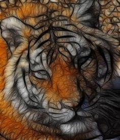 Tiger Fractalus by Till Walley
