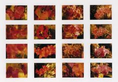 As with so many of his paintings, there are prototypes of the flower paintings to be found in the 'Atlas'.
