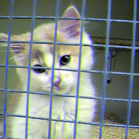 Urgent, needs more signatures!  Stop kitten experiments at Cardiff University