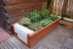 La creazione dell'orto in vaso può essere un'esperienza avventurosa per i vostri bambini