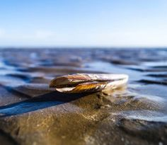 Second Place 'Razor Clam' by Simon Hagger! Cottages Ireland, Luxury Holiday Cottages, Photo Competition, Luxury Accommodation, Luxury Holidays, Clam, Two By Two, Rings For Men, Men Rings