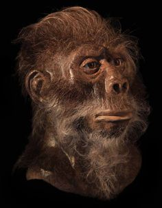 Homo habilis - reconstruction by Naturaliter… Homo Habilis, Photographs Of People, Lee Jeffries, Macabre, Paleo, Friends, Rocks, Amigos, Beach Wrap