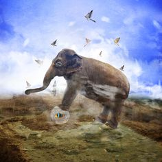 Excellent selection of surreal photography by Romanian photographer Cristina Venedict. Digital Art Photography, Surrealism Photography, Elephant Art, Kangaroo, Mystic, Freedom, Fantasy, Gallery, Animals