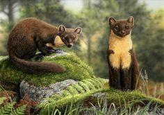 Pine Martens (Sold) | Paintings For Sale | Nigel Artingstall British - Wildlife Artist