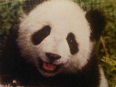 panda smile!