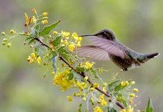 How to create a Hummingbird Garden in California.