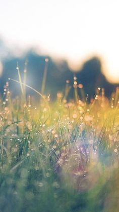 Lawn Green Nature Sunset Light Bokeh Spring Flare Happy #iPhone #5s #wallpaper