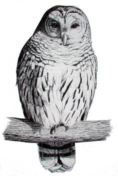 67 best Ideas for baby bird drawing owl sketch - Image 16 of 21 Bird Drawings, Animal Drawings, Pencil Drawings, Hahn Tattoo, Tattoo Ink, Bird Of Paradise Tattoo, Baby Memorial Tattoos, Funny Bird Pictures, Sheet Metal Art