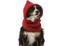 Mashable rounds up 12 great pet accessories on Etsy!