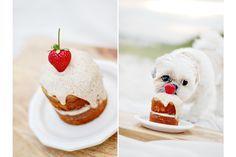 The best dog birthday cake - Coco's Birthday Weekend - Part II | Pretty Fluffy