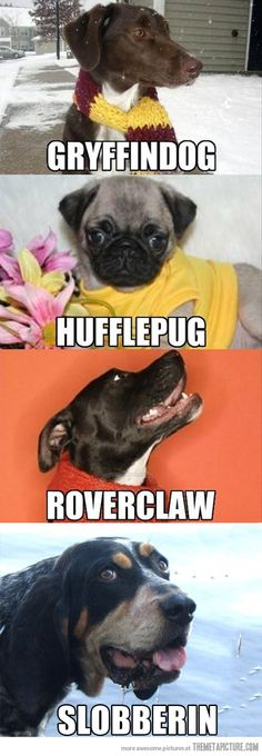 A couple of my favorite things, dogs and Harry Potter.