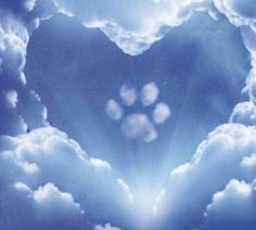 Paw Prints In Heaven - - Regenbogenbrücke - Perros Dog Quotes, Animal Quotes, Miss My Dog, Pet Loss Grief, Pet Remembrance, Dog Heaven, Dog Memorial, Pet Memorials, Dog Paws